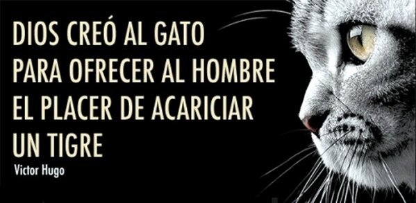 Sabado 20-02 / Dia del Gato - Doble caturday!